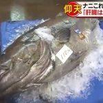 「衝撃!」巨大イシナギ!ベテラン漁師もびっくりの特大サイズを釣り上げる!